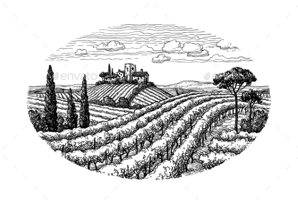 Hand Drawn Vineyard Landscape - Landscapes Nature