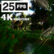 Swamp Forest 02 4K - VideoHive Item for Sale