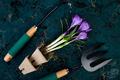 Gardening tools, peat pots, crocus flower. spring - PhotoDune Item for Sale