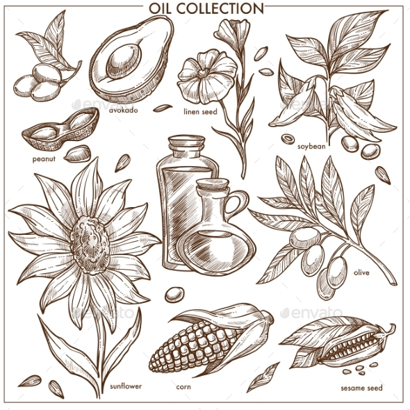 Oil Collection of Natural Ingredients Isolated - Food Objects