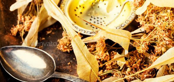 Dry linden leaf - Stock Photo - Images
