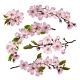 Sakura Flowers Background - GraphicRiver Item for Sale