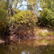 Trees Over a Pond in Autumn day - VideoHive Item for Sale