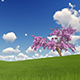 Lonely Spring Tree on Green Grass Field - VideoHive Item for Sale