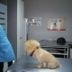 Examination of a Dog in a Vet Clinic - VideoHive Item for Sale
