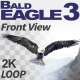 Bald Eagle-3 Front View - VideoHive Item for Sale