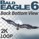 Bald Eagle-6 Back Bottom View - VideoHive Item for Sale