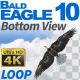 Bald Eagle-10 Circling Loop - VideoHive Item for Sale