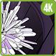 Dark Crystal VJ Visual - VideoHive Item for Sale