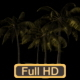 Sunset Palm Trees - VideoHive Item for Sale