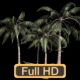 Sunny Day Palm Trees - VideoHive Item for Sale