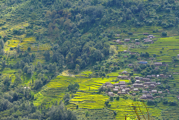 Terraced rice fields, paddy in Nepal. Organic farming - Stock Photo - Images