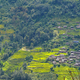 Terraced rice fields, paddy in Nepal. Organic farming - PhotoDune Item for Sale