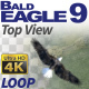 Bald Eagle-9 Circling Loop - VideoHive Item for Sale