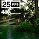 Swamp Forest 03 4K - VideoHive Item for Sale