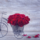 Red rose in bicycle vase - PhotoDune Item for Sale