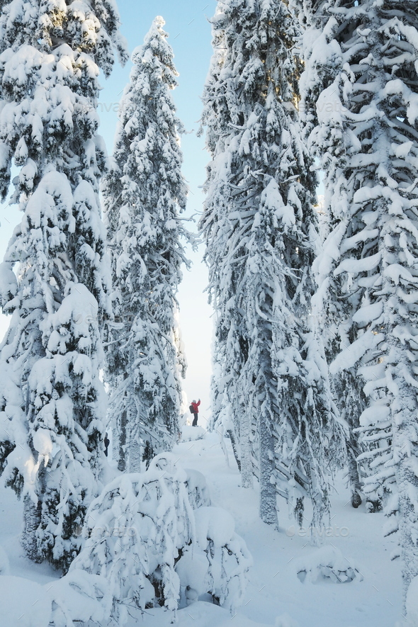White winter tunnel - Stock Photo - Images