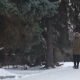 Man Is Walking Through the Forest - VideoHive Item for Sale