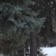 Man Is Looking on the Trees - VideoHive Item for Sale