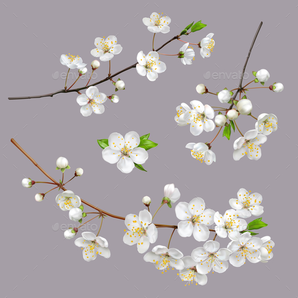 Blossoming Tree Branches Spring flowers - Flowers & Plants Nature