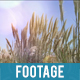Reeds waving in the Wind Natural background - VideoHive Item for Sale