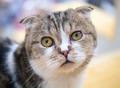 A wondering cat - PhotoDune Item for Sale