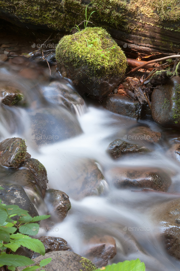 Water Flows Down Mossy Brook Wild Forest Stream Waterfall - Stock Photo - Images