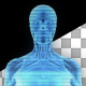 Female Muscular System Hologram - VideoHive Item for Sale