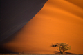 desert - PhotoDune Item for Sale