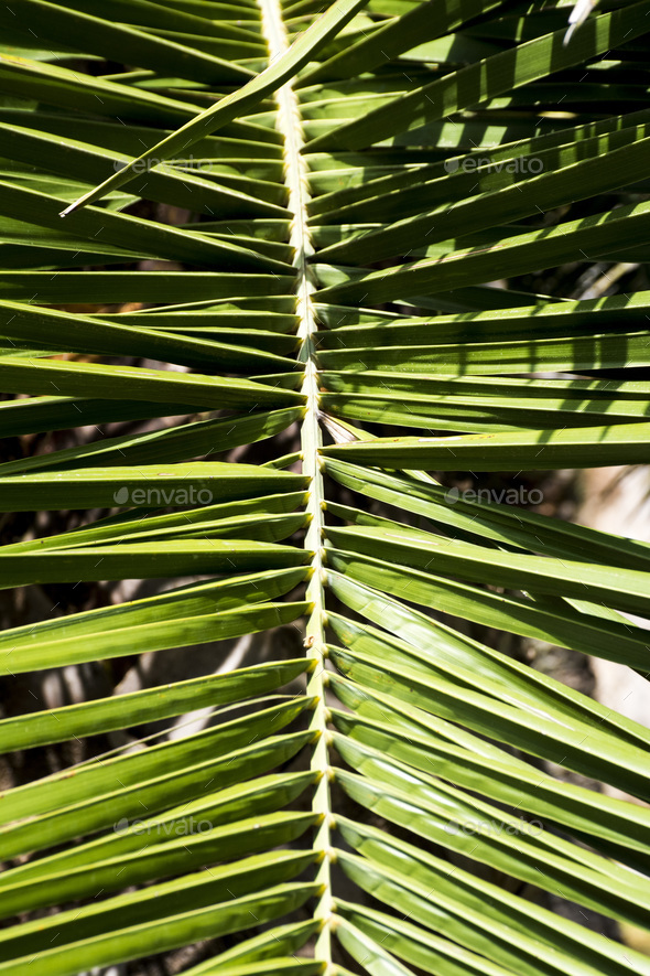 Palm leave background - Stock Photo - Images