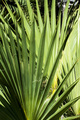 big palm leaves - PhotoDune Item for Sale