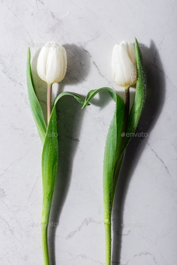 Two white tulips on a marble background. - Stock Photo - Images