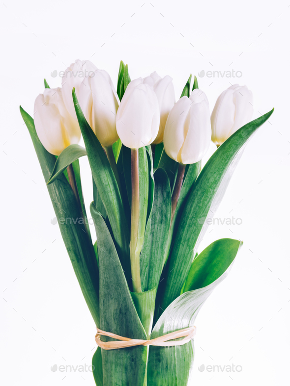 Bunch of fresh white tulips tied together. - Stock Photo - Images