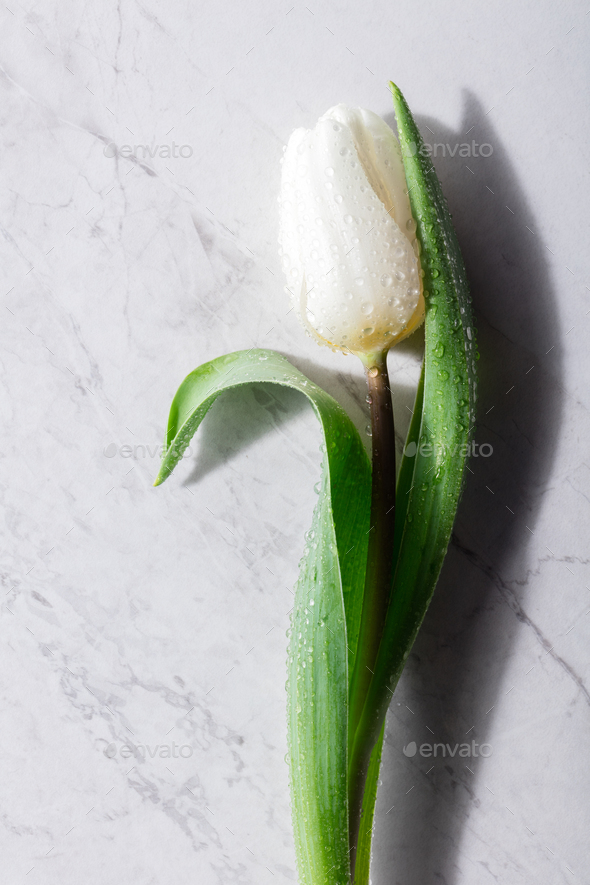 One white flower on a marble background. - Stock Photo - Images