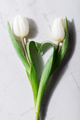 Two fresh tulips creating a heart shape. - PhotoDune Item for Sale