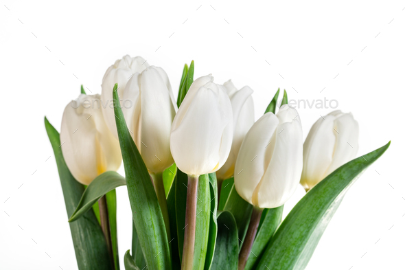 Group of white spring flowers in a close-up. - Stock Photo - Images