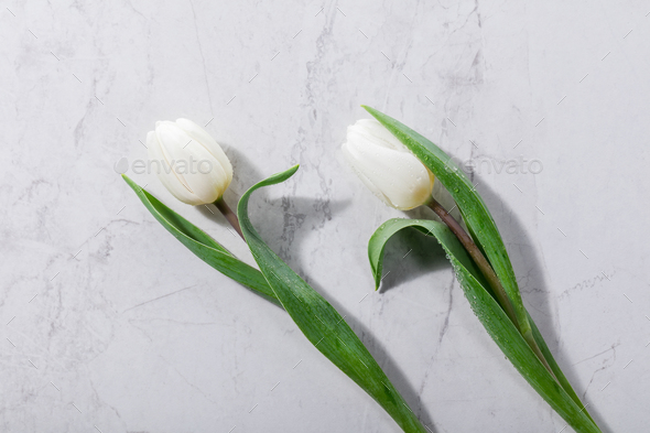 White spring flowers laying next to each other. - Stock Photo - Images