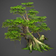 Game Ready Low Poly Tree 01