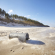 Trash can on a beach, environmental pollution concept - PhotoDune Item for Sale