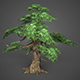 Game Ready Low Poly Tree 12