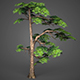Game Ready Low Poly Tree 15