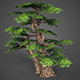 Game Ready Low Poly Tree 16