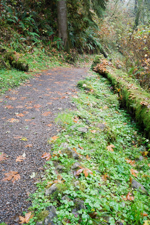 Rain Forest Trail Wet Gravel Lush Green Woods - Stock Photo - Images