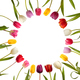 Different color tulips in the form of circle - PhotoDune Item for Sale