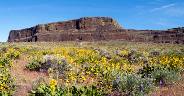 Spring Wildflowers Steamboat Rock Eastern Washington State - Stock Photo - Images