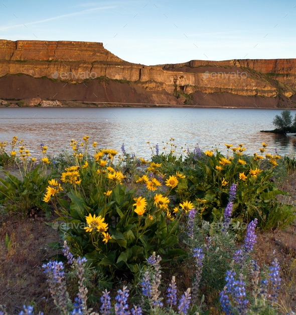 Spring Wildflowers Banks Lake Devil's Punch Bowl Eastern Washington - Stock Photo - Images