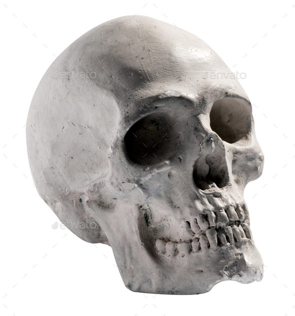 Toy model of a human skull - Stock Photo - Images