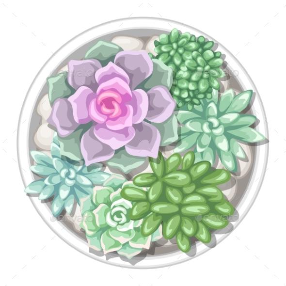 Various Succulents in Pot - Flowers & Plants Nature