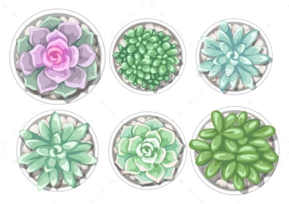 Set of Succulents in Pots - Flowers & Plants Nature