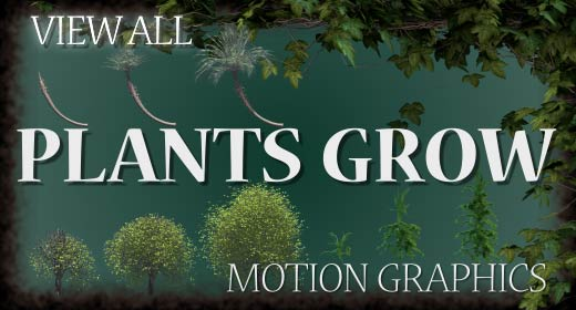 Plants Grow
